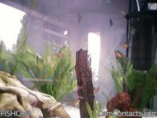 Start VIDEO CHAT with FISHCAM