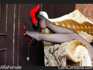 Webcam model AlfaFemale from CamContacts