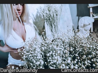 Webcam model DangerousBlondy from CamContacts
