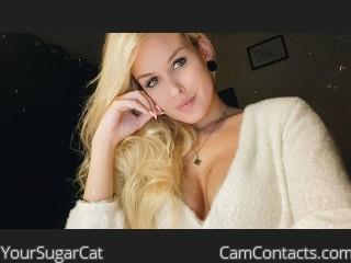 YourSugarCat profile picture